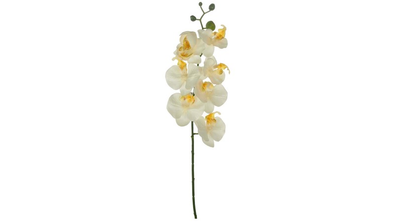 Silk Moth Orchid Stem - White