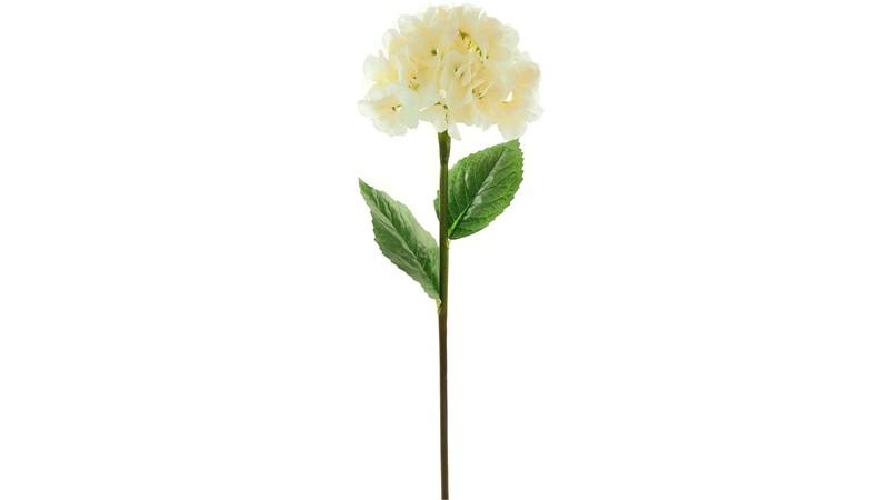 Mophead Hydrangea Stem - Ivory