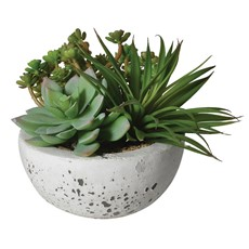 Succulents In Bowl - Green