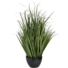 Large Potted Field Grass