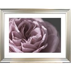 Rose Crop Framed Print