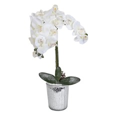 Large Icy Potted Orchid