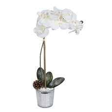 Icy Potted Orchid