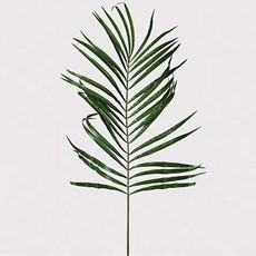 Palm Leaf Stem Areca - Green