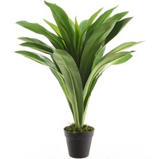Potted Bracaena - Black