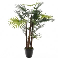 Potted Palm Fortunei - Black