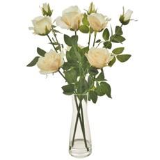 Serenity Roses - Cream