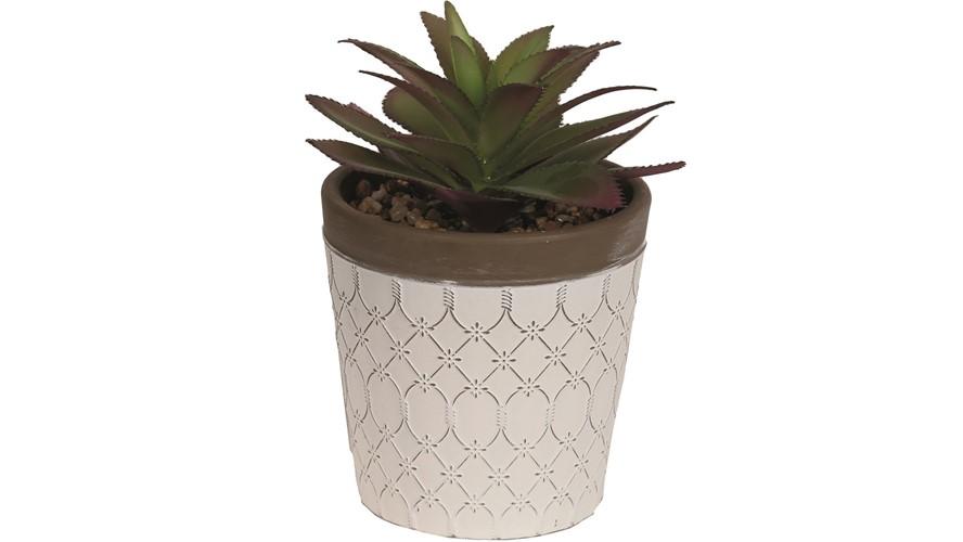 Potted Succulent Plants