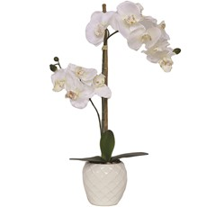 Ceramic Potted Orchid - Cream