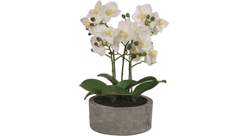 Grey Potted White Orchid - Small