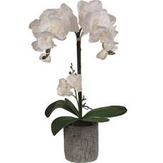 Grey Potted White Orchid - Large