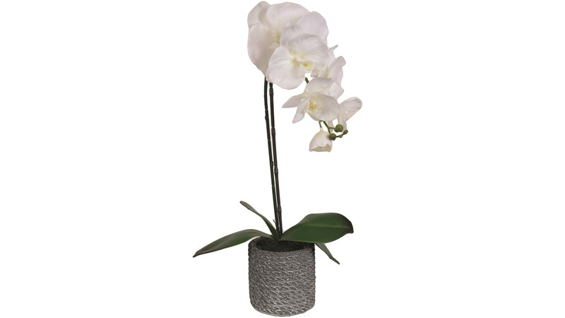 Grey Potted White Orchid - Medium