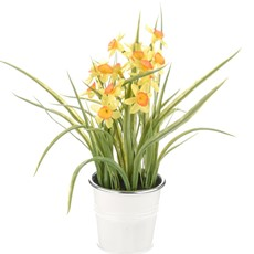 Potted Daffodil Tin