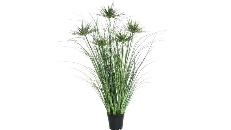 Umbrella Grass Flower - Large