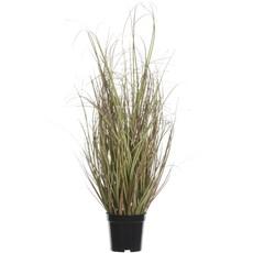 Sea Grass In Pot