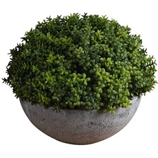 Potted Hebe Globe