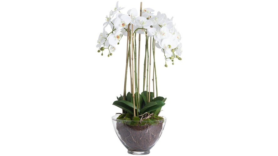 Potted Orchid in Glass Pot