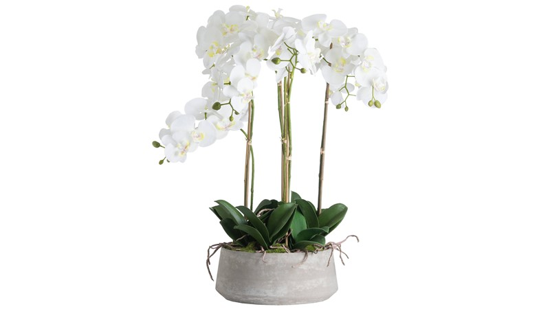 Potted Orchid in Stone Pot