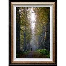 Woodland Walk Company Framed Print