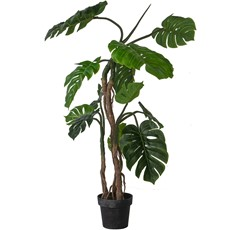 Potted Monstera Tree