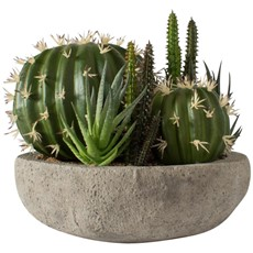 Potted Cactus Garden