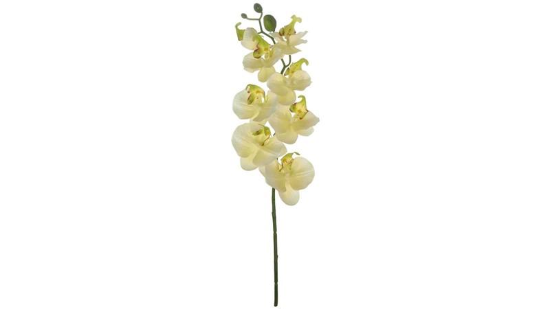 Silk Moth Orchid Stem - Cream
