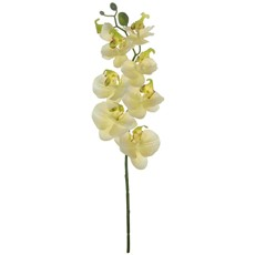 Silk Moth Orchid Stem - Cream