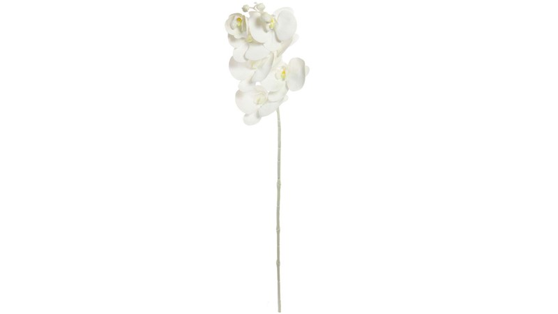 Seven Head Phalaenopsis Stem - White
