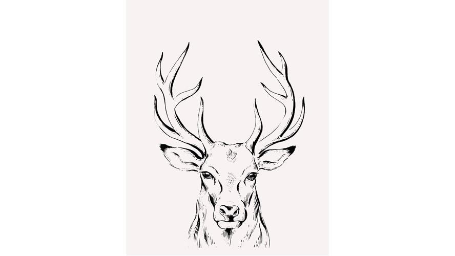 Stag Framed Print