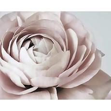 Blush Floral Framed Print