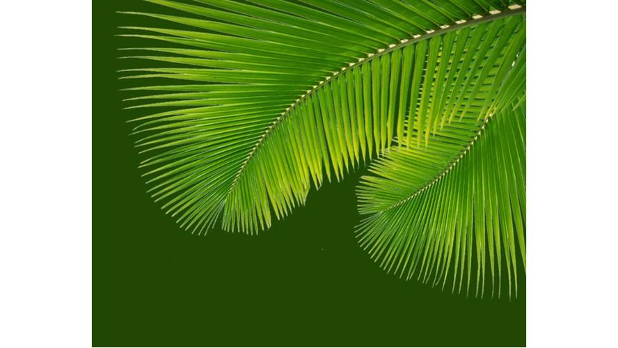 Tropical Leaves Framed Print