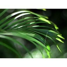 Tropical II Framed Print
