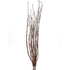 Dried Peach Branches - Natural
