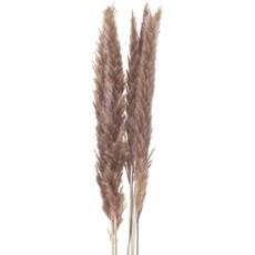 Mini Natural Pampas Grass