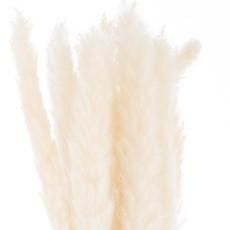Mini White Pampas Grass - Bunch Of 15