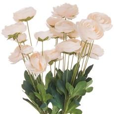 Cream Ranunculus